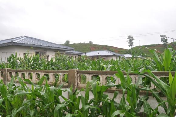 2011_7월 모니터링 방북